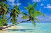 五一节放假期间睡觉比较晚,整天头脑都是昏昏沉沉的